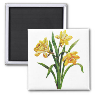 A Golden Host of Embroidered Daffodils Square Magnet