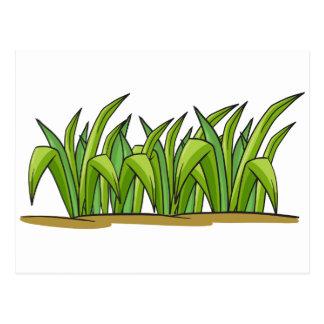 a grass postcard