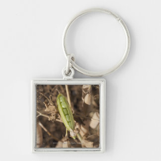 A Green Pea Pod On A Dried Pea Pod Plant Silver-Colored Square Key Ring