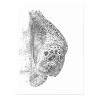 A Green Sea Turlte in Grayscale Postcard