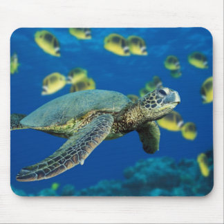 A green sea turtle swims past a school mouse pad