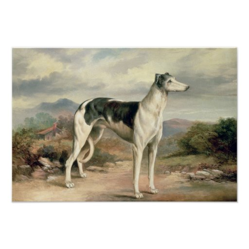 A Greyhound in a hilly landscape Posters