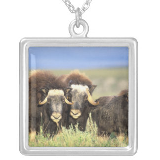 A group of muskoxen browse on willow shrubs on square pendant necklace