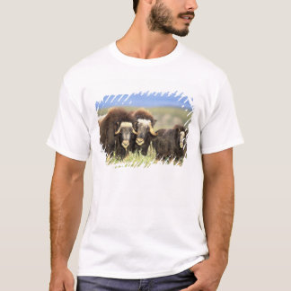 A group of muskoxen browse on willow shrubs on T-Shirt