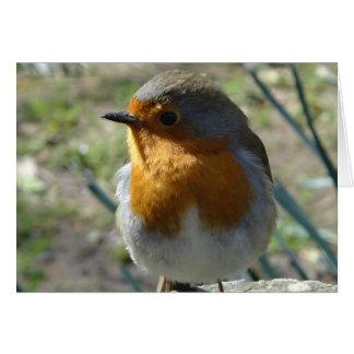 A Heligan Robin Greeting Card