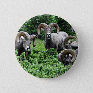 A Herd of Rams 6 Cm Round Badge