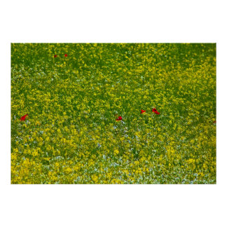 A hint of poppies posters