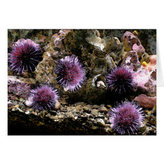 A Horde of Urchins Card