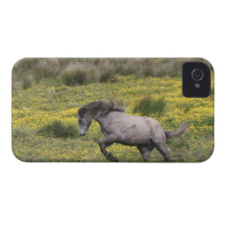 A horse running in a field of yellow wildflowers blackberry bold covers