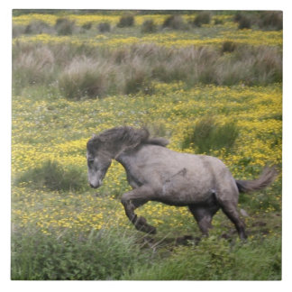 A horse running in a field of yellow wildflowers large square tile