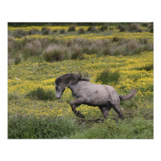 A horse running in a field of yellow wildflowers poster