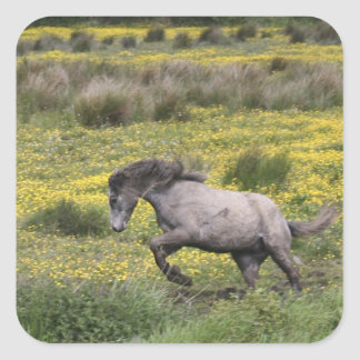 A horse running in a field of yellow wildflowers square sticker