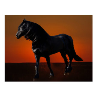 A horses sunset romp postcard