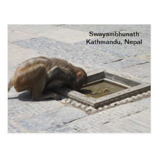 A Hot Drink in Swayambhunath Postcard
