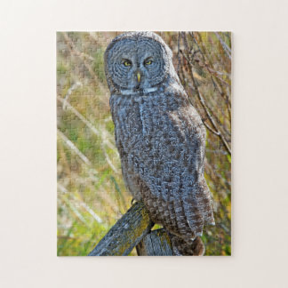 A juvenal Great Grey Owl1 Jigsaw Puzzle