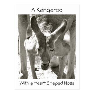 A Kangaroo With a Heart Shaped Nose Postcard