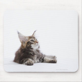 A kitten of Maine Coon cat Mouse Pad