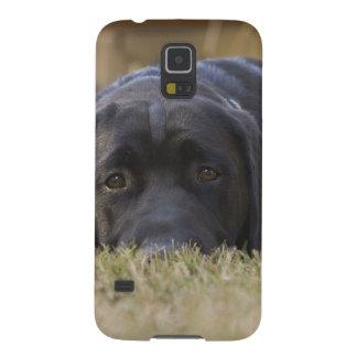 A Labrador Retriever puppy. Galaxy S5 Cases