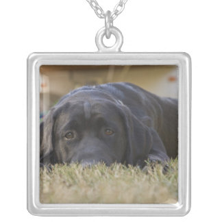 A Labrador Retriever puppy. Square Pendant Necklace