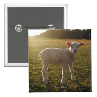 A Lamb at the Setting of the Sun Sweden 15 Cm Square Badge
