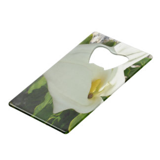 A Large Single White Calla Lily Flower