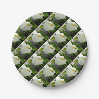 A Large Single White Calla Lily Flower Paper Plate