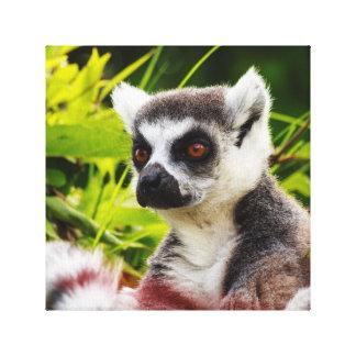a lemur of madagascar on wrapped  canvas