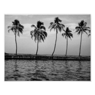 A line of palm trees in black and white poster
