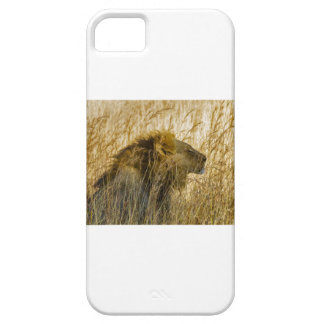 A Lion Waits, Zimbabwe Africa Barely There iPhone 5 Case