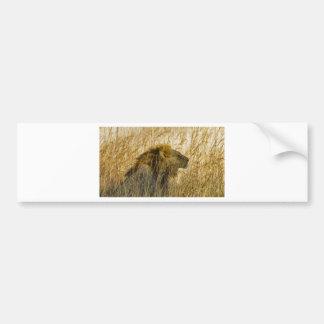 A Lion Waits, Zimbabwe Africa Bumper Sticker