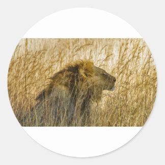 A Lion Waits, Zimbabwe Africa Classic Round Sticker