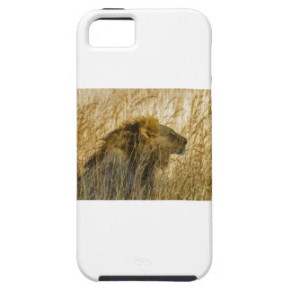 A Lion Waits, Zimbabwe Africa iPhone 5 Covers