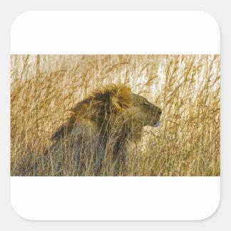 A Lion Waits, Zimbabwe Africa Square Sticker