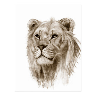 A Lion - Without Pride Drawing Sketch Art Postcard