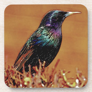A Little Bird Told Me Starling Bird Photograph Drink Coasters