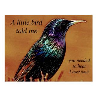 A Little Bird Told Me Starling Bird Photograph Postcard