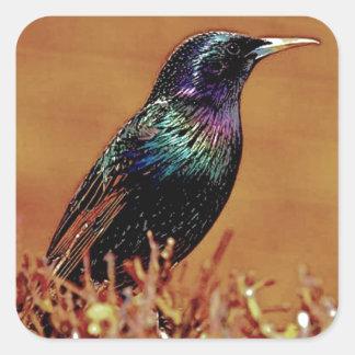 A Little Bird Told Me Starling Bird Photograph Square Sticker