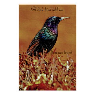 A Little Bird Told Me Starling Bird Poster
