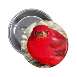A Little Birdie Told Me Button