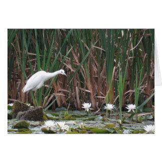 A Little Blue Heron Fishing Card