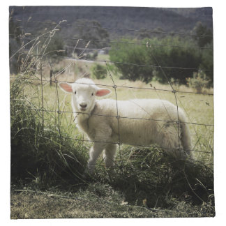 a little white lamb behind a fence in a field cloth napkins