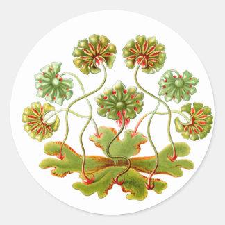 A Liverwort Classic Round Sticker