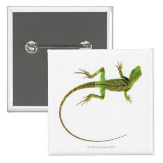 A lizard on pure white ground pinback button