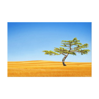 A lone tree in fields of gold canvas print