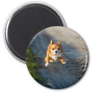 A long haired brown and white Chihuahua Running 6 Cm Round Magnet
