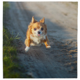 A long haired brown and white Chihuahua Running Cloth Napkin