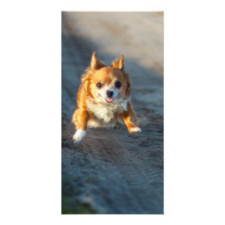 A long haired brown and white Chihuahua Running Photo Card Template