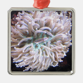 A Long Tentacle Plate Coral Silver-Colored Square Decoration