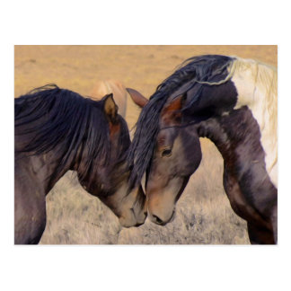 A Love of Horses Postcards