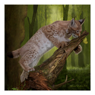 'A Lynx and a Butterfly' Art/Poster